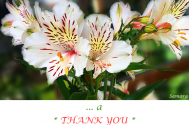 a-THANK-YOU-to-all-of-my-quotations-readers