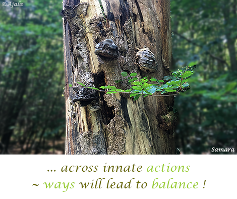 across-innate-actions--ways-will-lead-to-balance