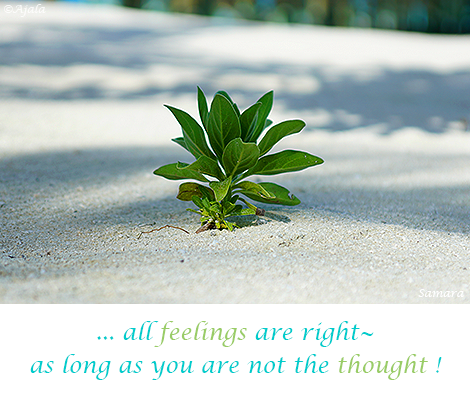 all-feelings-are-right--as-long-as-you-are-not-the-thought