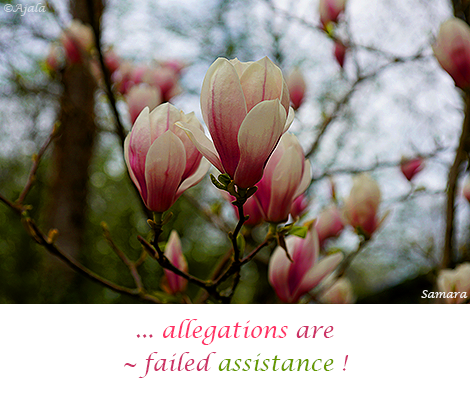 allegations-are---failed-assistance