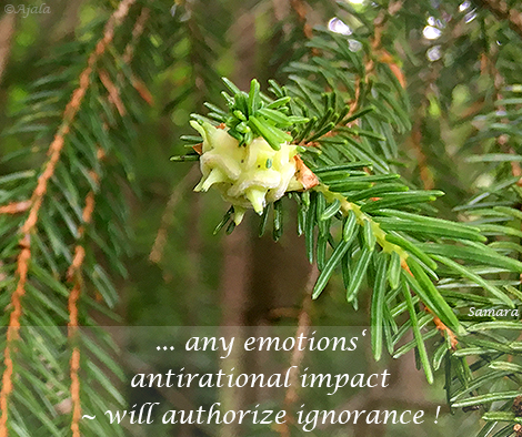 any-emotions-antirational-impact--will-authorize-ignorance