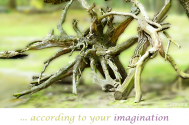 according-to-your-imagination--your-behavior-is-constructed