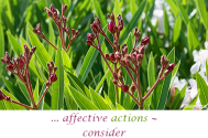 affective-actions--consider-insufficient-informations