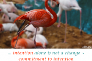 intention-alone-is-not-a-change--commitment-to-intention-have-concrete-implementation