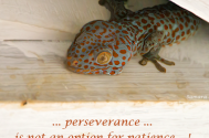 perseverance-is-not-an-option-for-patience