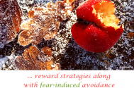 reward-strategies-along-with-fear-induced-avoidance--will-coronate-addictive-impacts