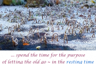 spend-the-time-for-the-purpose-of-letting-the-old-go--in-the-resting-time-the-novel-will-collect-itself