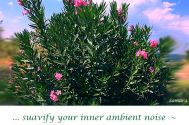suavify-your-inner-ambient-noise--and-illuminating-ideas-may-blossom