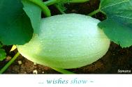 wishes-show--unused-skills