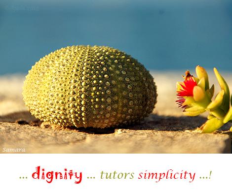dignity-tutors-simplicity