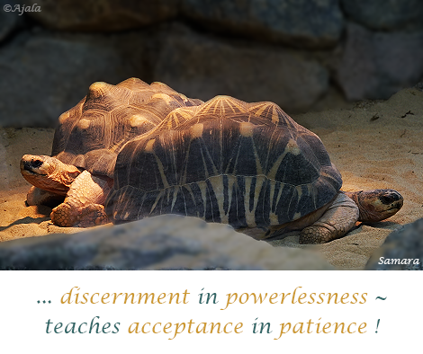discernment-in-powerlessness--teaches-acceptance-in-patience