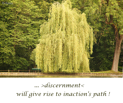 discernment-will-give-rise-to-inaction-s-path