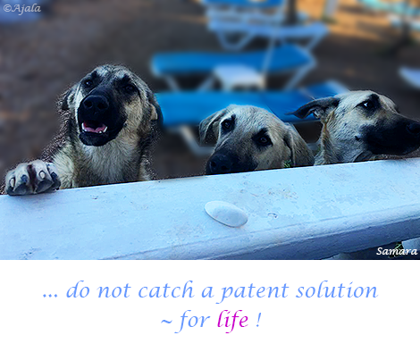 do-not-catch-a-patent-solution--for-life