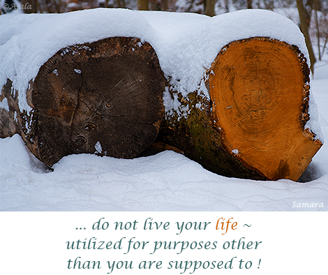 do-not-live-your-life--utilized-for-purposes-other-than-you-are-supposed-to