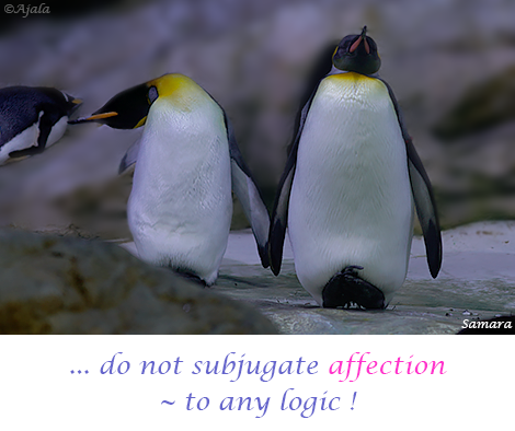 do-not-subjugate-affection--to-any-logic
