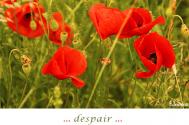 despair-is-a-deadlock-without-discernment