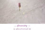 diversity---is-discovered-in-the-beholder-s-sensibility