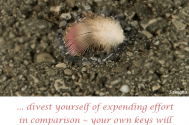 divest-yourself-of-expending-effort-in-comparison--your-own-keys-will-not-open-other-peoples-soul-houses