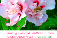 during-cultered-conflicts-in-their-fundamental-truth--cogitations-will-be-used-sophisticatedly