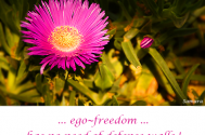 ego--freedom-has-no-need-of-defense-walls
