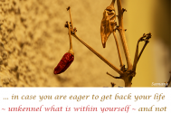 in-case-you-are-eager-to-get-back-your-life--unkennel-what-is-within-yourself--and-not-what-someone-else-has-shed