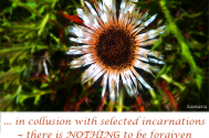 in-collusion-with-selected-incarnations--there-is-NOTHING-to-be-forgiven-but-rather-to-be-recognized