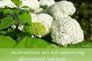 incarnations-are-not-subserving-disoriented-reactions--shape-whilst-you-are-proactive