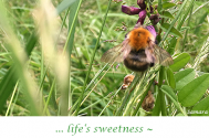 life-s-sweetness--shows-up-in-quick-witedness