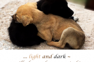 light-and-dark--will-always-be-connected