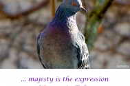 majesty-is-the-expression--of-keen-mindfulness