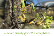never-ending-growth-s-acceptance--will-reveal-your-qualities