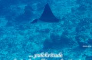 pulchritude-denies-herself-to-evaluation