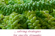 solving-strategies-for-specific-struggles--are-incessantly-inherent