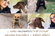 some-encounters-will-reveal-passing-travellers--whilst-others-will-show-you-true-connectedness