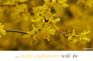 stars-cogitations-will-be-more-cooperative--in-co-creation!