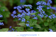 suppression--will-not-surpass-fear