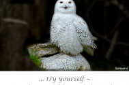 try-yourself--in-the-eternal-loom-of-the-soul