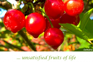 unsatisfied-fruits-of-life--will-soothe-development