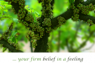 your-firm-belief-in-a-feeling--will-not-turn-it-into-verity