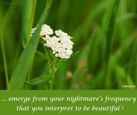 emerge-from-your-nightmare-s-frequency-that-you-interpret-to-be-beautiful