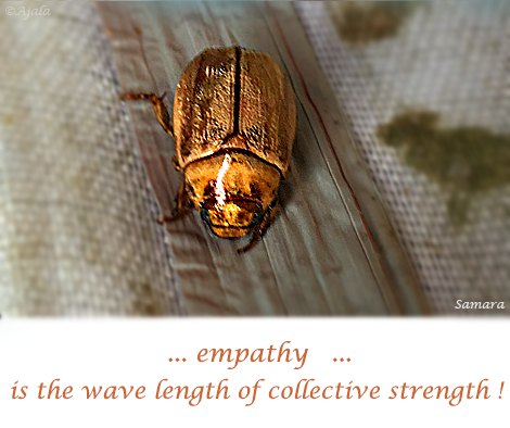 empathy-is-the-wave-length-of-collective-strength