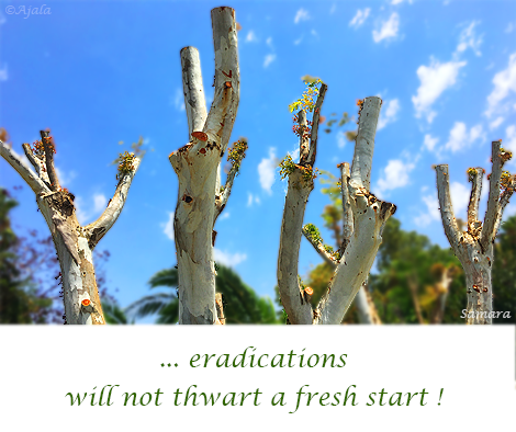 eradications-will-not-thwart-a-fresh-start