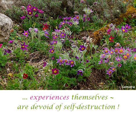experiences-themselves--are-devoid-of-self-destruction