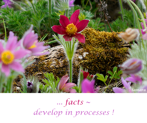 facts--develop-in-processes