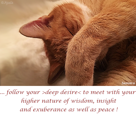 follow-your-deep-desire-to-meet-with-your-higher-nature-of-wisdom-insight-and-exuberance-as-well-as-peace