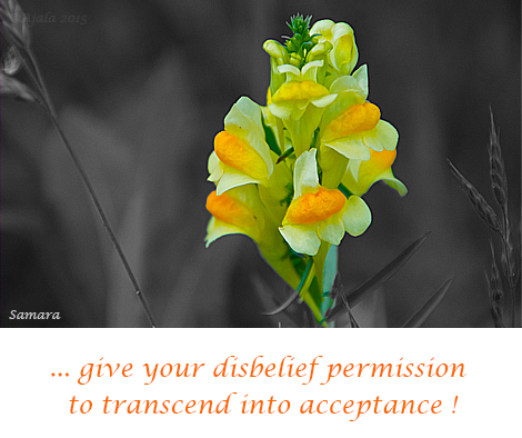 give-your-disbelief-permission-to-transcend-into-acceptance