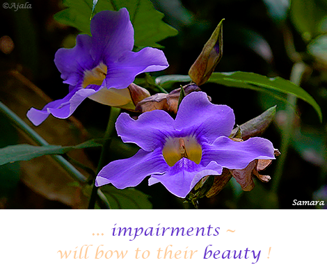 impairments--will-bow-to-their-beauty