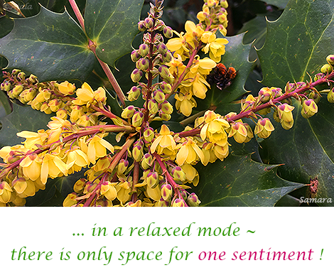 in-a-relaxed-mode---there-is-only-space-for-one-sentiment