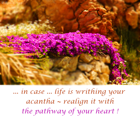 in-case-life-is-writhing-your-acantha--realign-it-with-the-pathway-of-your-heart