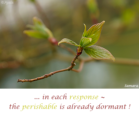 in-each-response--the-perishable-is-already-dormant